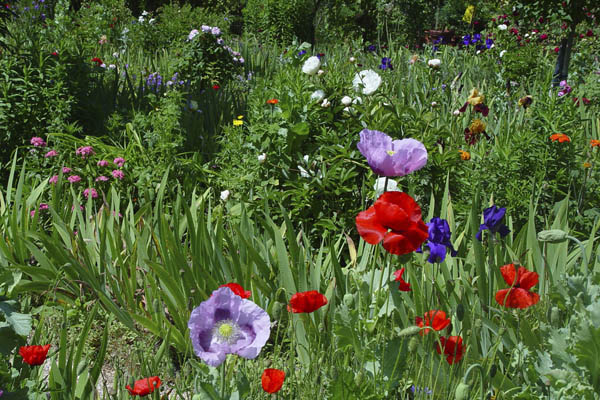Giverny Flower Garden